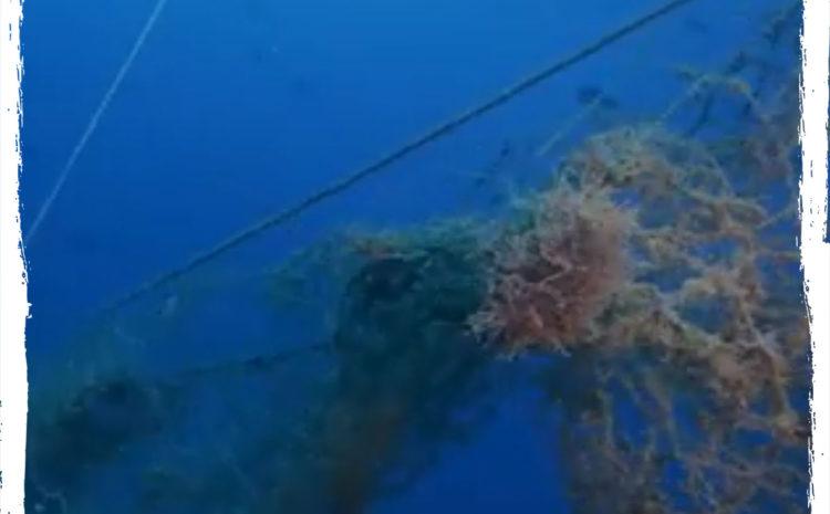Proyecto Emporda mar – Allí Donde Nos LLeve El Mar_(La San José )